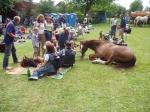 koňský odpočinek 2005
