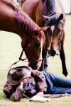 s koněm podruhé 2001